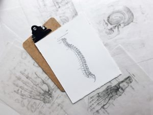 Hand Drawn Diagram of Human Spine