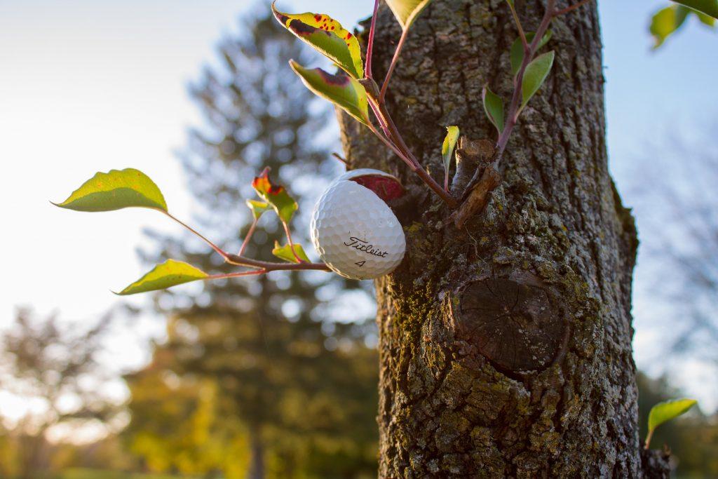 Golf ball stuck in a tree